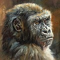 Noble Ape by David Stribbling