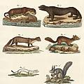 Noble Furs by Splendid Art Prints