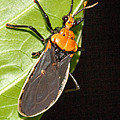 Nocturnal Bug by Jean Noren