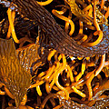 Noodles Of The Sea by Gwyn Newcombe