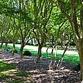 Norfolk Botanical Garden 3 by Jeelan Clark