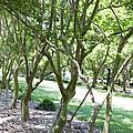 Norfolk Botanical Garden 7 by Jeelan Clark