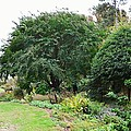 Norfolk Botanical Gardens 10 by Jeelan Clark