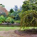 Norfolk Botanical Gardens Canal by Jeelan Clark