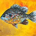 North America Sunfish by Robin Pelton