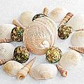 North Carolina Circle Of Sea Shells by Andee Design