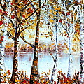 North Country Lake Superior Birch Trees Early Autumn by Carole Spandau