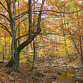 North Creek Autumn - Mid Afternoon - 04043 by Byron Spencer