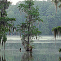 North Florida Cypress Swamp by Rich Leighton