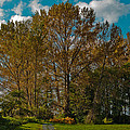North Lions Park In Mount Vernon Washington by David Patterson