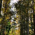 North Lions Park - Mount Vernon Washington by David Patterson