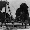 North Pole Sewing, C1909 by Granger