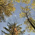 North Woods In The Fall by Birgit Tyrrell