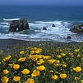 Northern California Coast by Susan Rovira