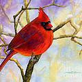 Northern Cardinal by Hailey E Herrera