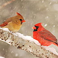 Northern Cardinals by Harry Moulton