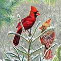 Northern Cardinals by Marilyn Smith