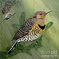 Northern Flicker And Red-breasted Nuthatch by Sandra Maddox