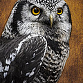 Northern Hawk Owl by Wes and Dotty Weber