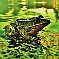 Northern Leopard Frog by Sarah Pemberton
