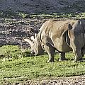 Northern White Rhinoceros  by Photographic Art by Russel Ray Photos