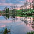 Northfield Daffodils Sunset by Bill Wakeley