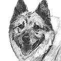 Norwegian Elkhound Sketch by Kate Sumners