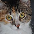 Nosey Lil Kitty by Trish Tritz