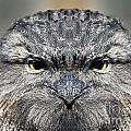 Not A Appy Bird by Ben Yassa