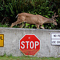 Not The Crosswalk Again by Kym Backland