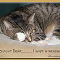 Not Tonight Dear ... by Ericamaxine Price