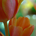 Nothing As Sweet As Your Tulips by Donna Blackhall