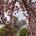 Notre Dame 1 by Art Ferrier