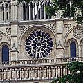 Notre Dame by Alex D
