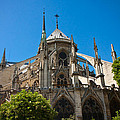 Notre Dame Cathedral by Anthony Doudt