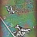 Nova Scotia Skydivers by John Malone