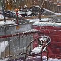 First Snowfall Nov 17 2014 by Ylli Haruni