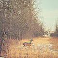 November Deer by Carrie Ann Grippo-Pike