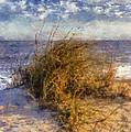 November Dune Grass by Daniel Eskridge