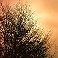 November Memories by Jan Bickerton