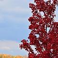November Red by Maria Urso
