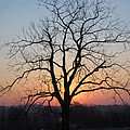 November Walnut Tree At Sunrise by Conni Schaftenaar