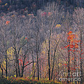 November Woods by Alan L Graham