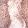 Nude Female Torso Drawings 3 by Gordon Punt