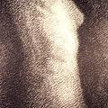 Nude Female Torso Drawings 4 by Gordon Punt