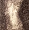 Nude Female Torso Drawings 5 by Gordon Punt