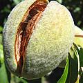 Nut Case by Brooks Garten Hauschild
