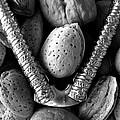 Nutcracker by David Pantuso