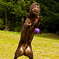 Nute And The Ball by Jean Noren
