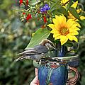 Nuthatch Bird Having Tea by Luana K Perez